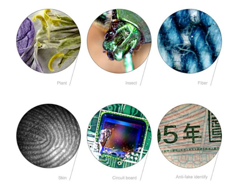 Vergrößerte Dinge unter dem Mikroskop