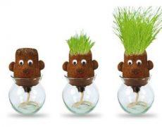grass-heads-koepfe