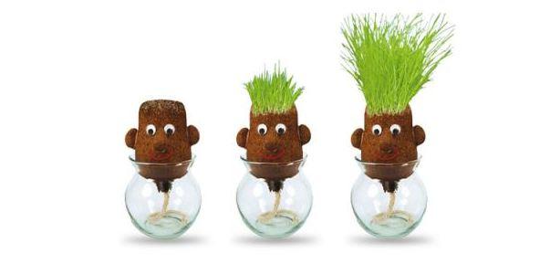grass heads koepfe