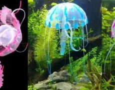 qualle-aquarium