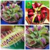 fleischfressende-pflanzen-samen-insekten