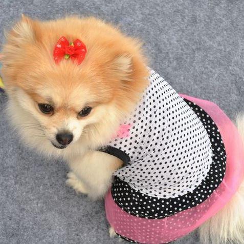 Hunde Kleid