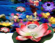 solar lotus  (3)