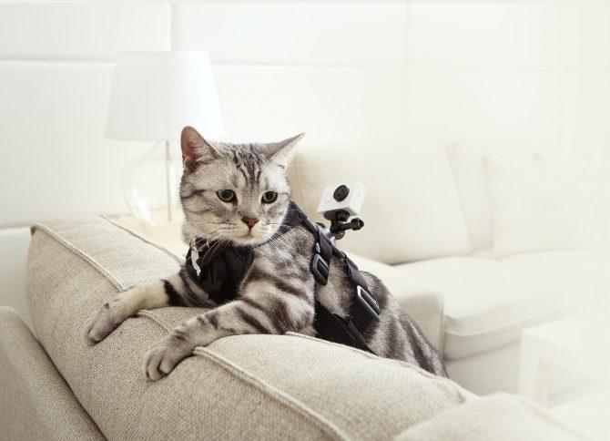 Pussy magnet Action-Kamera! ;-)