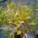 elephone-p7000-pflanze