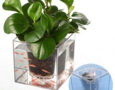 aquarium-vase