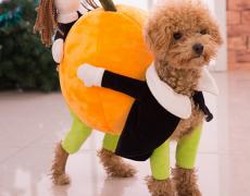Hundekostüm Thanksgiving