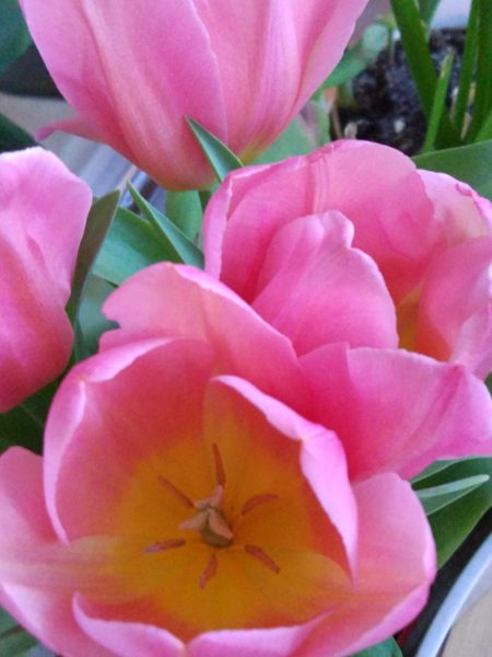 Xiaomi Mi5 Kamera: Testfoto Blume