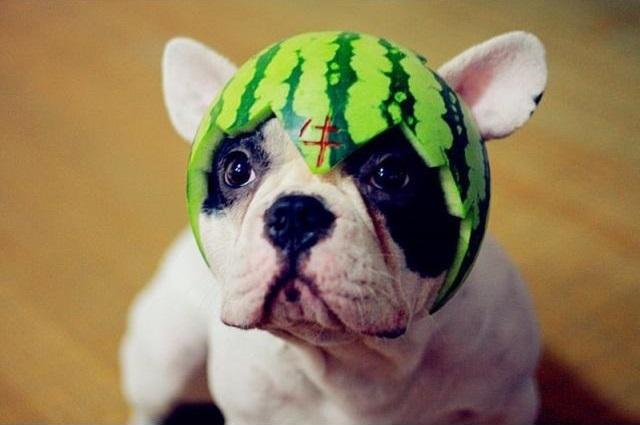 wassermelone hund