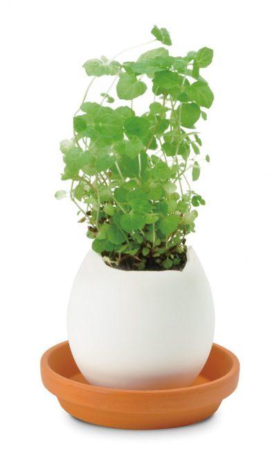 ei plant (1)
