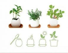 ei plant (2)