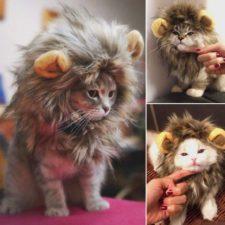 Katze Löwe Mähne