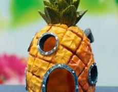 aquarium ananas (1)