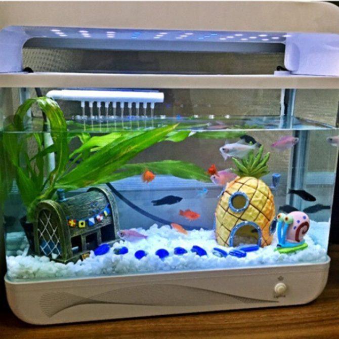 aquarium ananas (3)
