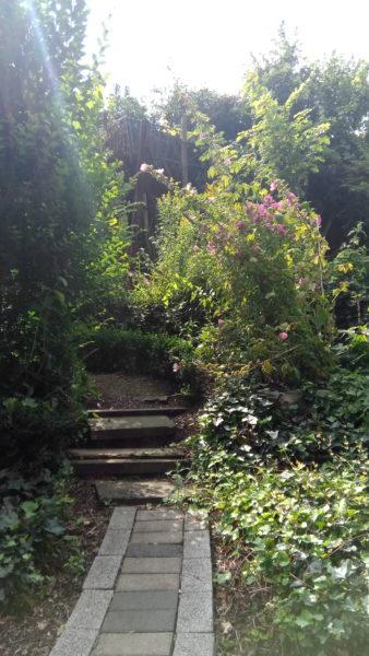 Vernee Apollo Lite Test Foto 4: ein Gartenweg
