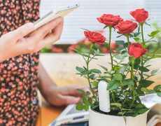 Xiaomi Pflanzensensor