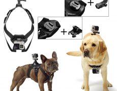 actioncam-hundegeschirr