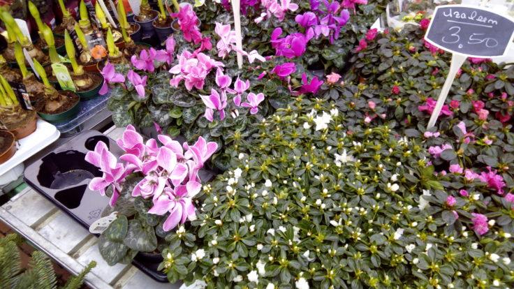 Blumen-Beispielfoto der Oukitel U15 Pro Kamera