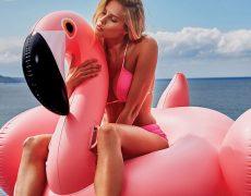 Flamingo Wassertier