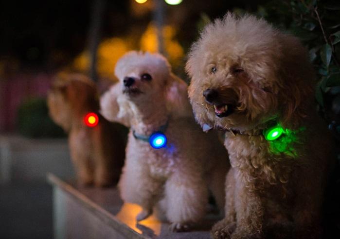 Die smarte Hundemarke von Xiaomi Nachtaktivität
