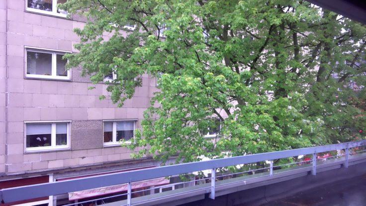 CHUWI Hi13 3K Windows-Tablet Testfoto von einem Baum