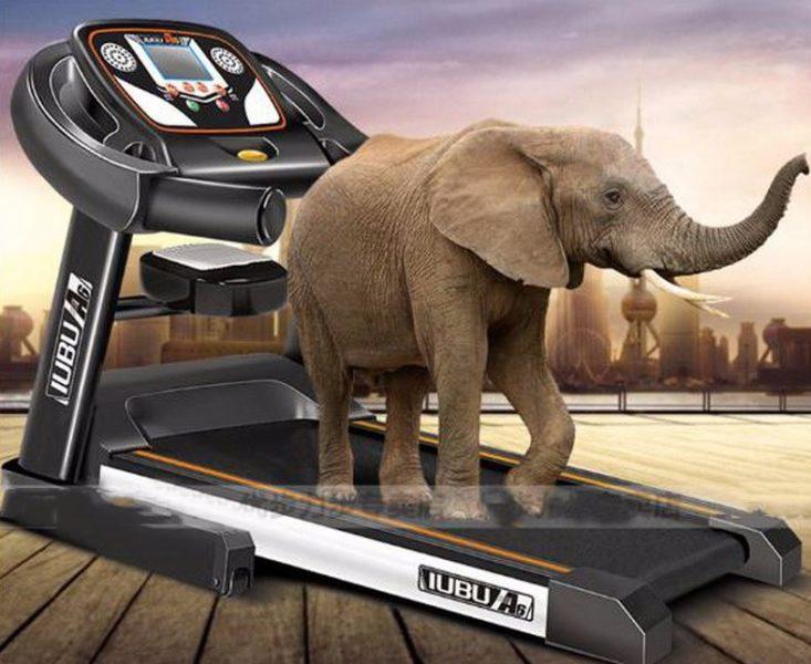 Auch für übergewichtige Elefanten geeignet
