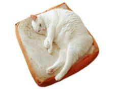 Katze Toast Kissen