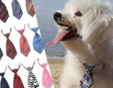 Hunde-Krawatten