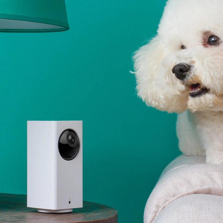 Xiaomi Dafang Überwachungskamera und Hund
