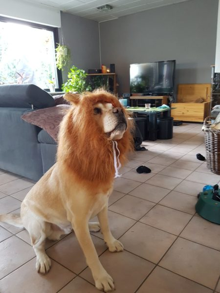 Löwenmähne Hund