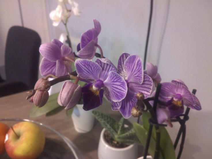FNF iFive Mini 4S Testfoto Blume