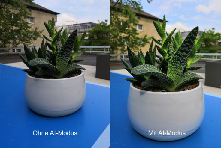 Honor 10 Testfoto Pflanze AI Vergleich