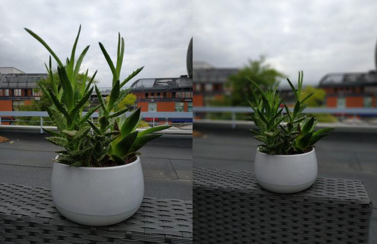 Xiaomi Mi Max 3 Testfoto Pflanze Portrait Vergleich
