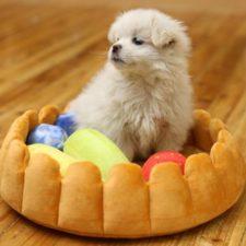 Obstkuchen Bett