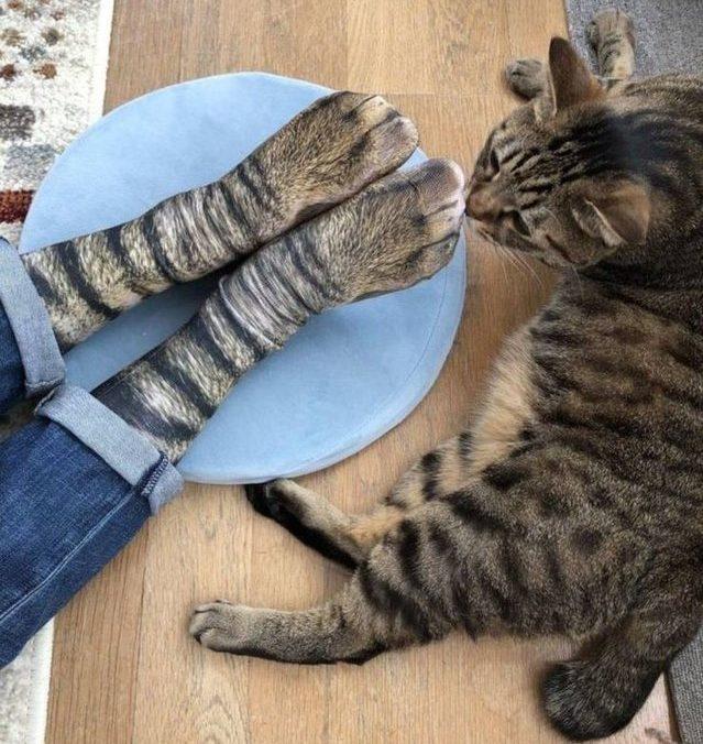 Tiersocken Katze
