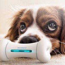 Wickedbone Hunde-Spielknochen Werbung