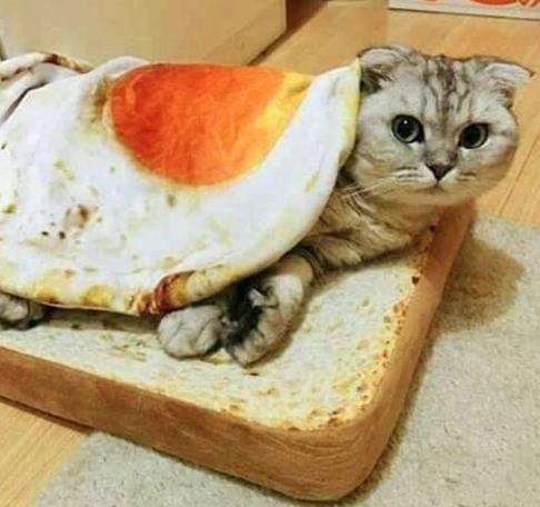 Toast Katze Spiegelei