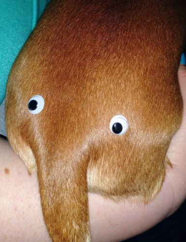 Googly Eyes Hund