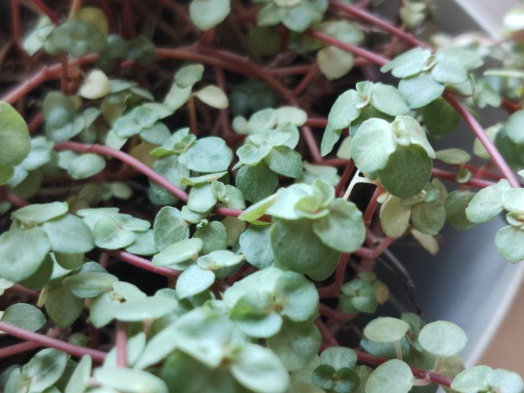 Oppo Reno 10X Zoom Testfoto Pflanze