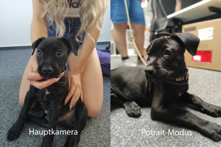 Xiaomi Mi A3 Hauptkamera Testfoto Hund Portraitvergleich