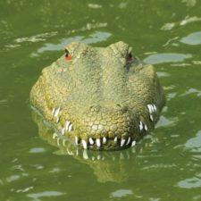 RC Krokodil Rennboot Wasser