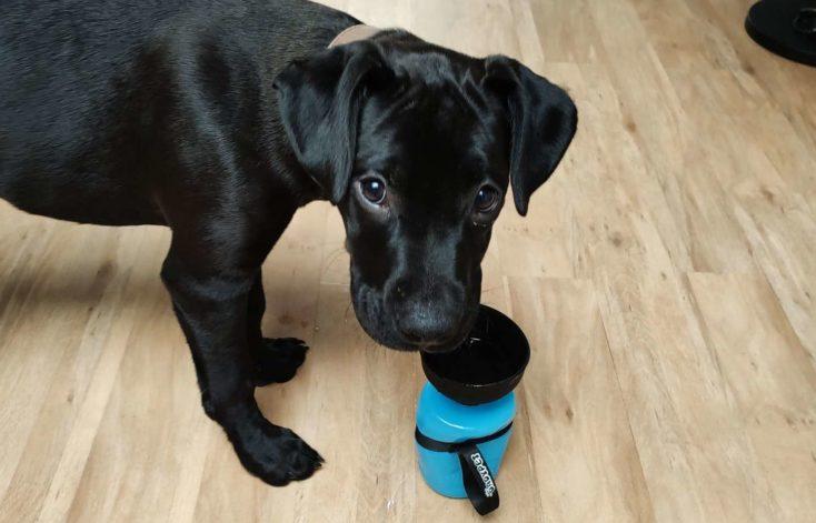 Hundetrinkflasche von Dadypet