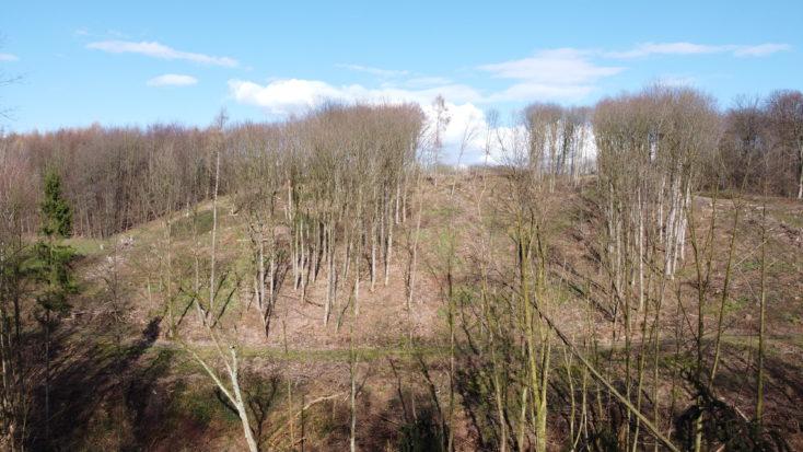DJI Mavic Mini Wald