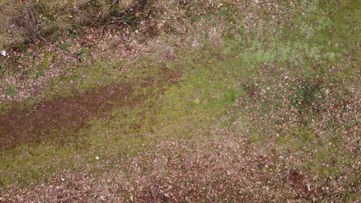 DJI Mavic Mini Foto Wiese senkrecht aus der Luft
