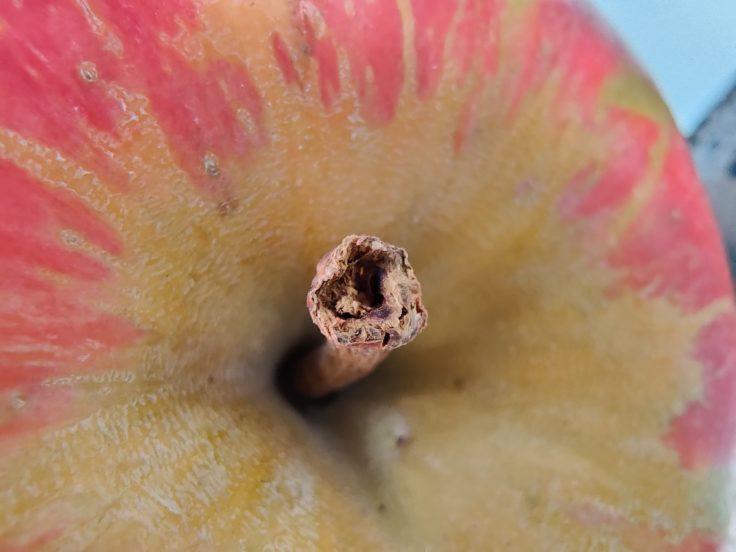 OnePlus 7T MAkro Apfel