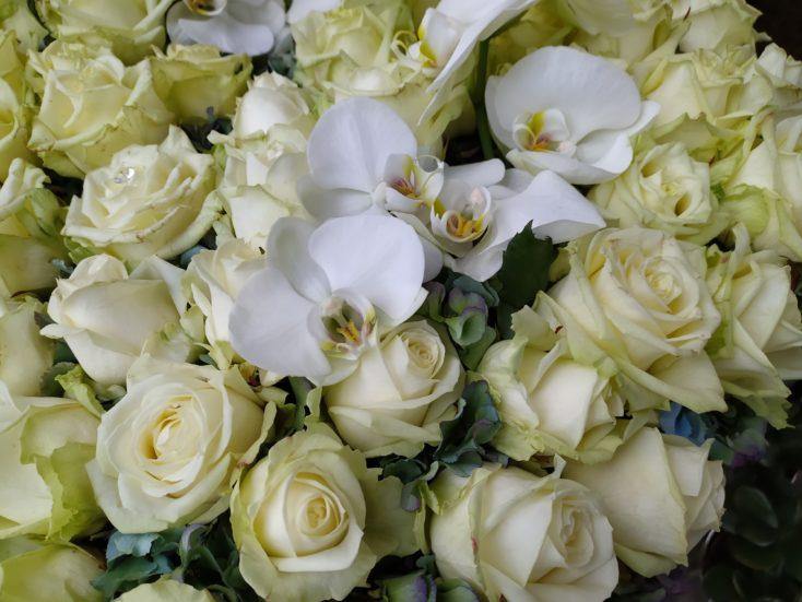 Redmi Note 8 Smartphone Testfoto Hauptkamera Blumen