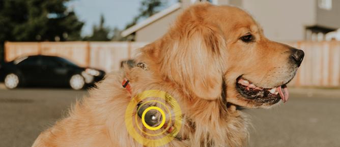 FOUND GPS Tracker Hund
