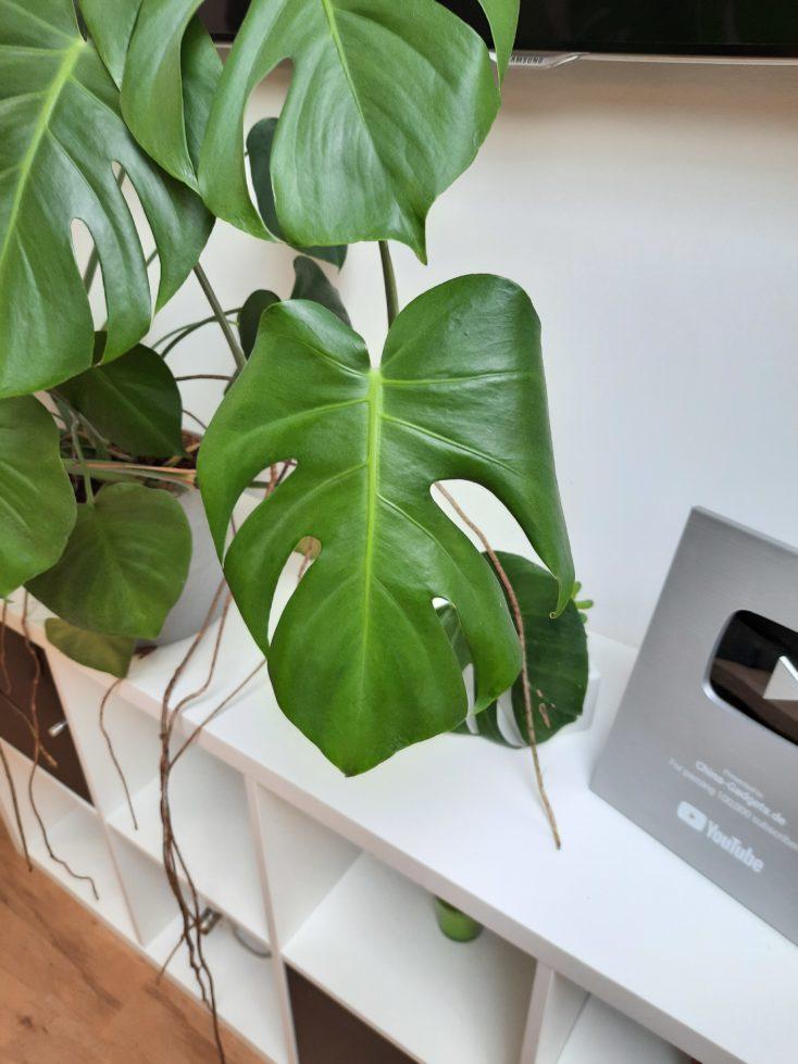 Samsung Galaxy A51 Testfoto Pflanze