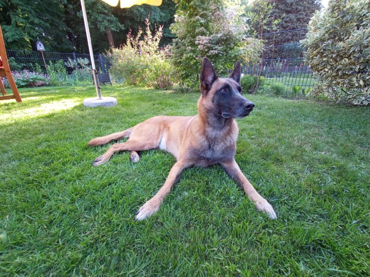 Realme 6i Ultraweit Hund