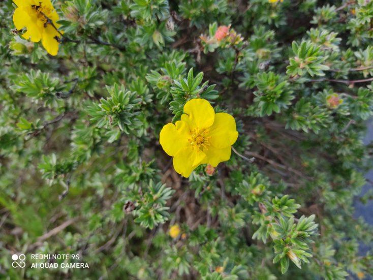 Redmi Note 9S Testfoto Hauptkamera Schaerfe Blume